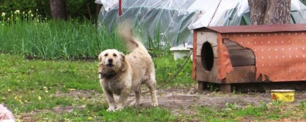 Карантин по бешенству животных объявили сразу в 9 сёлах Воронежской области