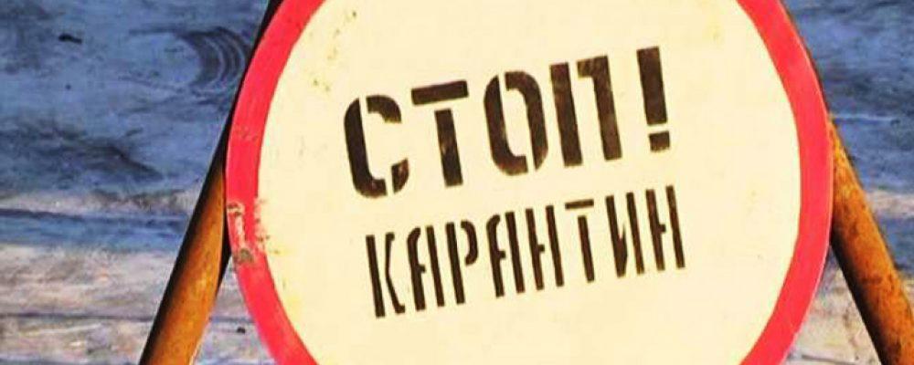 В нескольких районах Воронежской области снят карантин по бешенству