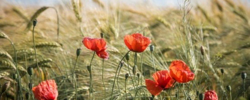 В Калачеевском районе появится новый природный заказник «Яр Рассыпной»