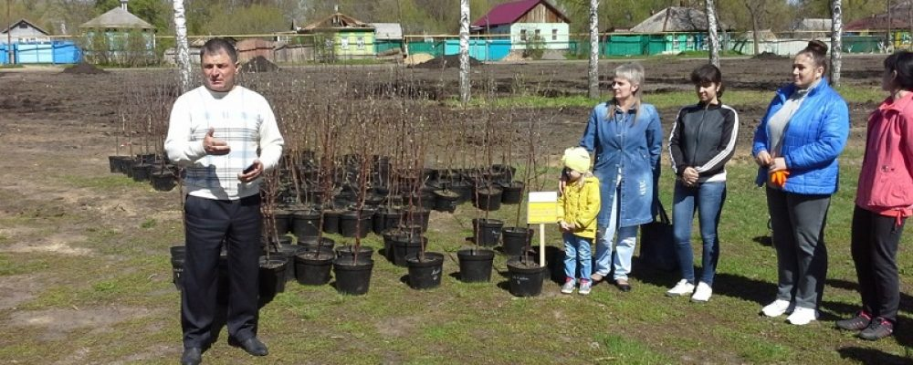 У стадиона «Урожай» заложен яблоневый сад