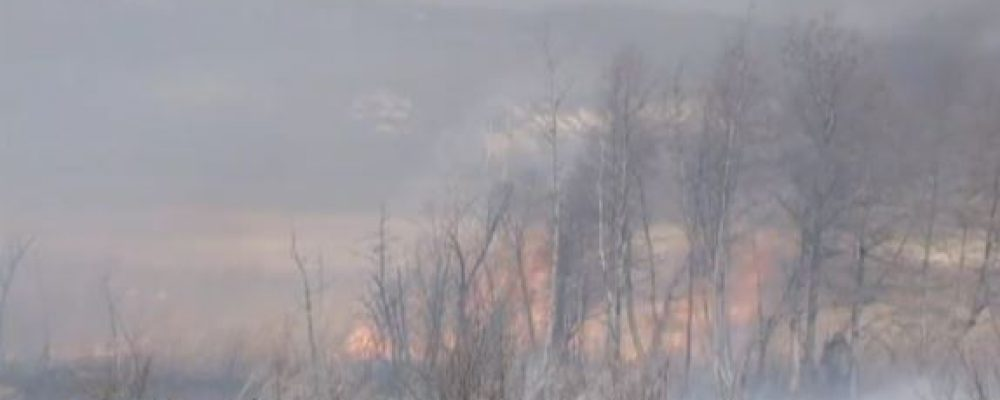 Чтобы уберечь лес от пожаров, калачеевцы выжгли несколько гектаров «опасной» травы