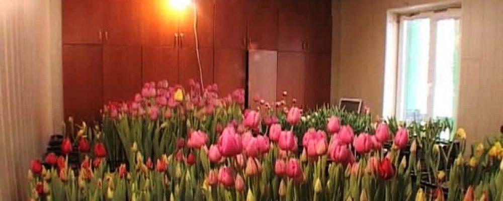 Жители Калача освоили цветоводство и уже ждут сверхприбылей (ВИДЕО)