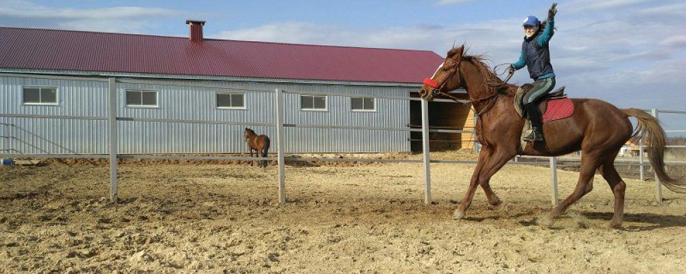 Конюшня «Талисман» приглашает на верховые прогулки, уроки верховой езды, фотосессии с лошадьми!!!