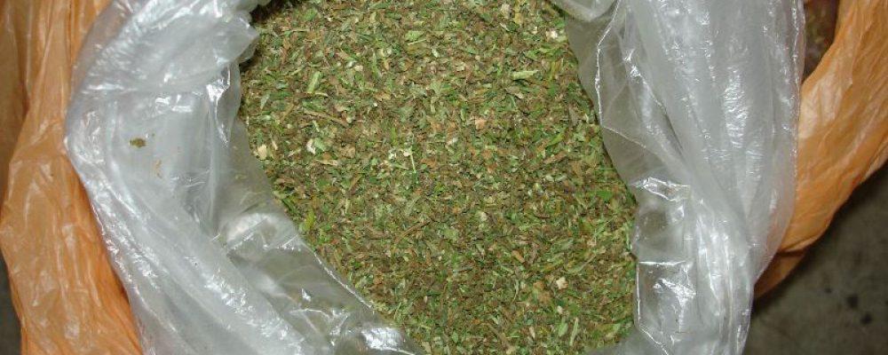 Калачеевские полицейские изъяли из незаконного оборота крупную партию марихуаны