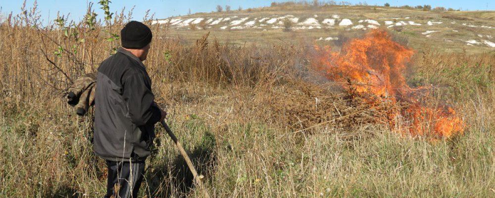 Калачеевские полицейские уничтожили более 6000 кустов дикорастущей конопли