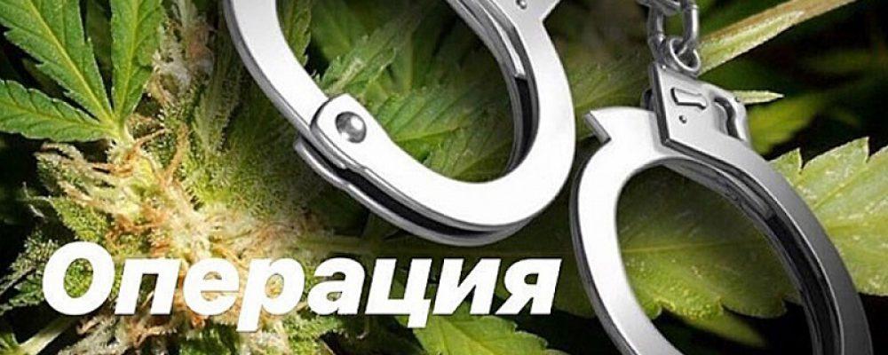 В Калачеевском районе началась антинаркотическая операция «Мак-2020»